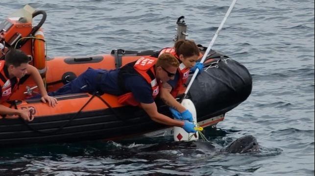La Guardia Costera de EE. UU. Al rescate de una tortuga frente a las costas de Nueva Jersey